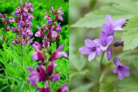 сравнение видов растения