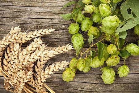 хмель и пшеница