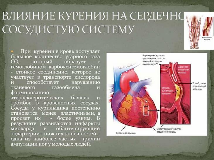 Курение негативно влияет на сердечно сосудистую систему